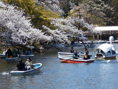 満開の桜  IN  井之頭公園  パート 2