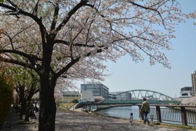 東京散歩 赤羽駅から赤羽自然観察公園を通って浮間の桜並木を歩きました。
