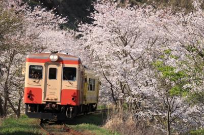 菜の花と桜!春のいすみ鉄道&小湊鉄道撮影旅。