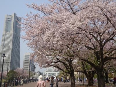 春の横浜 インターコンチネンタル一泊旅
