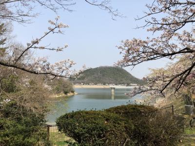 夙川,苦楽園桜ハイキング