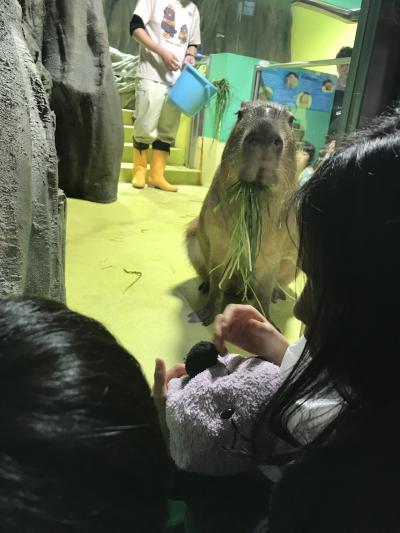 竹島水族館といちご狩り