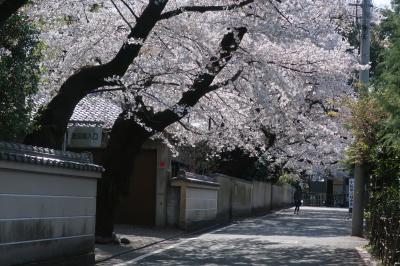 川越。喜多院も氷川神社も裏の桜もひたすら混んでいた。