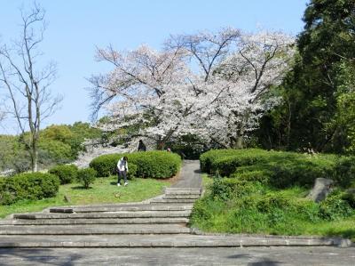 春の陽気に誘われて、大阪万博記念公園・自然文化園で、「桜三昧の一日」を過ごす。(2019)