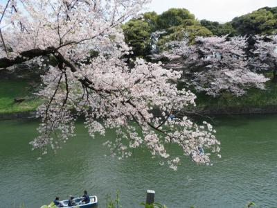 千代田区内の桜を訪ねて
