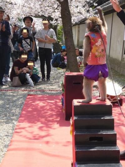 桜満喫 大和川付け替え記念碑から 東高野街道をてくてく