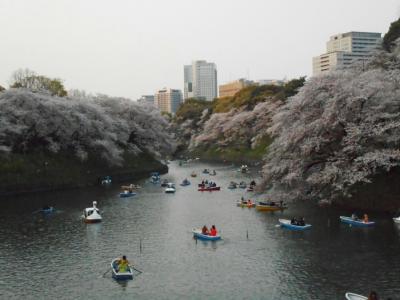2019年 4月上旬 桜観賞⑥