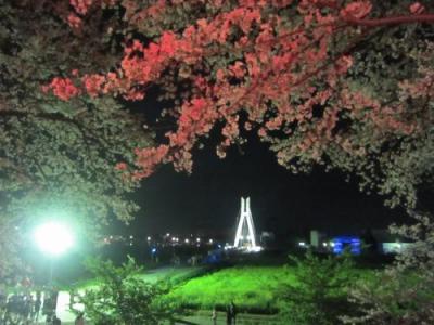 '19 埼玉 権現堂の満開の桜と菜の花 ~夜編~