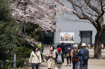 博物館でお花見を 2019