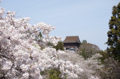 桜の吉野ー金峯山寺・金峯神社・吉野水分神社・如意輪寺・櫻本坊ー