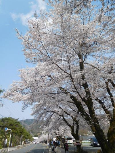 長瀞2019桜 【2】寳登山神社
