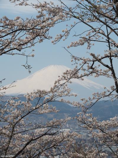360度の大パノラマ!富士山と桜が楽しめる弘法山公園~出雲大社相模分祠