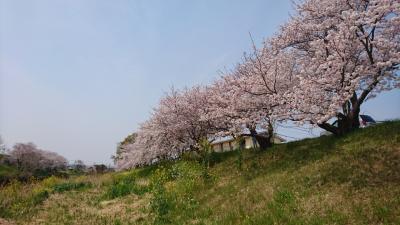 【ちょっとお出掛け】二川宿で花見なんぞ。2019