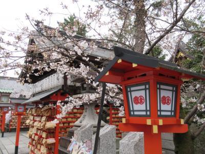 町屋の片泊まりで巡る京都の桜2019  その5 安井金毘羅宮・本法寺・祇園さゝ木でランチ