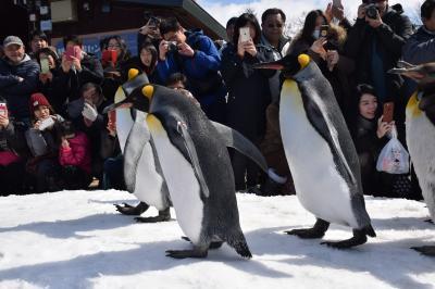 巡るJapan 北海道 旭山動物園