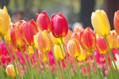 横浜公園チューリップと花いっぱい里山ガーデン 【 ガーデンネックレス横浜2019 】