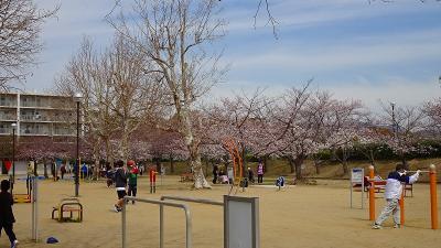 伊丹市内の桜追っかけ(4) 瑞ヶ池公園のお花見。