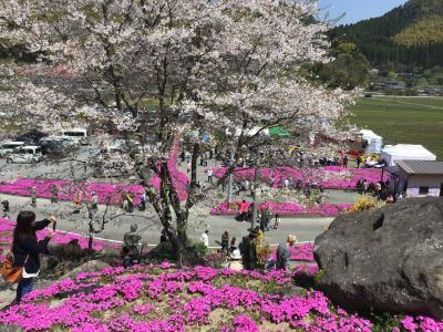 芝桜園 花の森・徳重に芝桜を見に