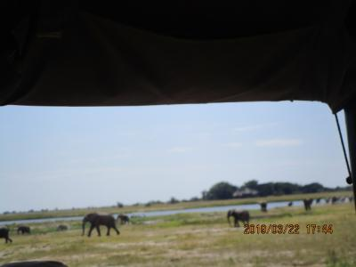 チョベ国立公園 4WDで野生動物ウォッチング