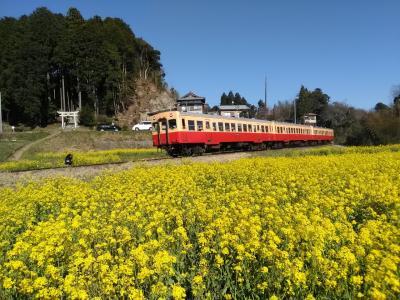 春本番!桜と菜の花を求めて☆千葉のローカル鉄道 沿線歩き旅 (後編)