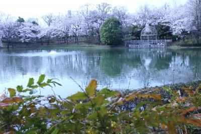 間に合った見頃のカッパ伝説のある近所の公園の桜~薄曇りの中でホワイトバランスを変えて遊びながら