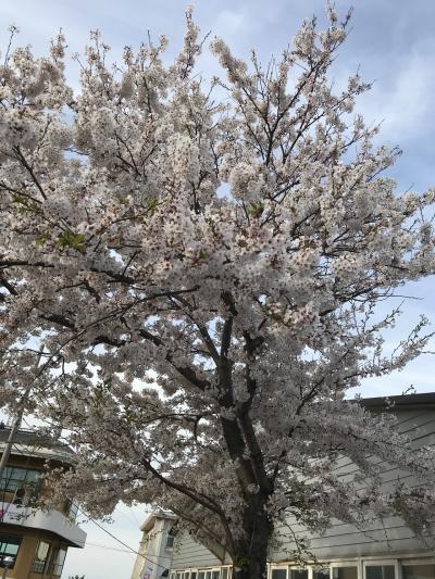 大阪経由で済州島旅行 1