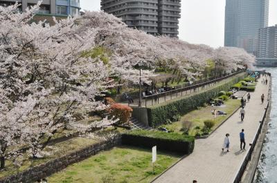 東京ウオーターフロントの桜