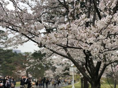 平成最後「皇居・乾通り一般公開」千鳥ヶ淵、毛利庭園、吉高の大桜