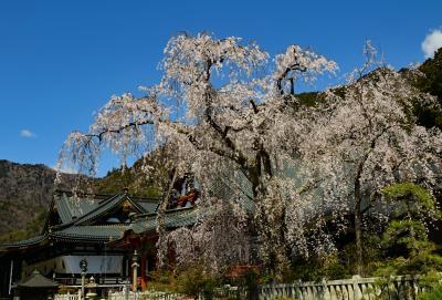 サクラ、温泉、そして富士山、甲州の旅
