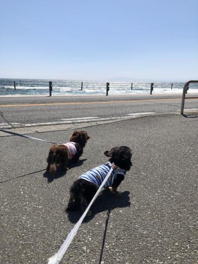 愛犬と伊豆旅行