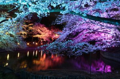 衝撃的でもあった幻想的な夜桜ライトアップ♪ 東海市大池公園の昼から夜まで