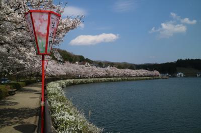 平成を締める桜は庄原市の上野公園