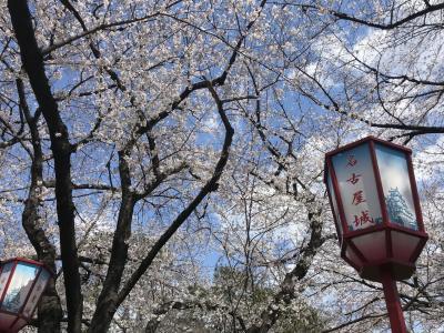 名古屋城お堀の周りでお花見