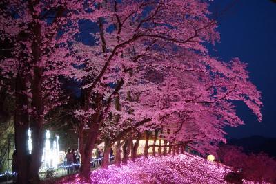 信玄公祭りから天津司舞とさがみ湖イルミリオンへ(二日目夜完)~イルミリオン最終日に滑り込み。夜桜の時期と重なって、えもいわれぬ美しさです~
