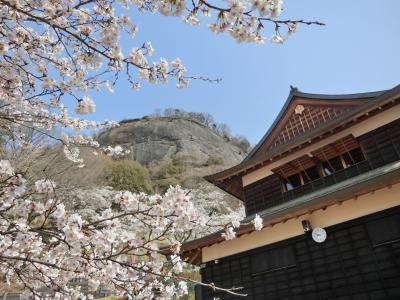岩殿山 桜祭り