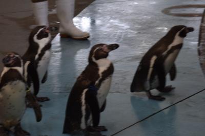 巡るJapan 三重 ジジと孫の二人旅 鳥羽水族館