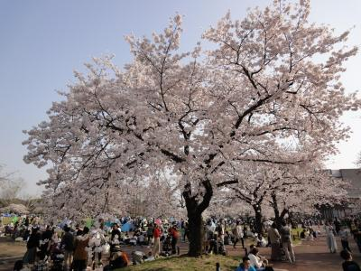 万博公園サクラ祭り2019 +とある休日の出来事(関西編Ver.9)
