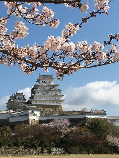 京都4月②~桜を追いかけて京都から姫路城へ!そして、旅のしめはこれ!やっぱり桜のパフェ笑