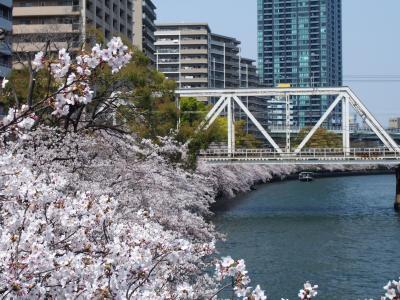 2019年桜 桜の宮から大阪城