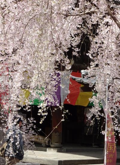 【犬山・京都】犬山城と醍醐寺の桜を愛でる旅