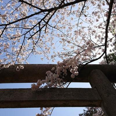 篠山城跡の桜と和久傳の森