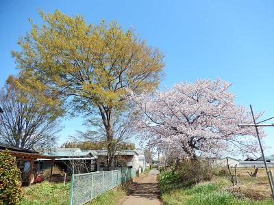春爛漫の所沢市南永井の風景