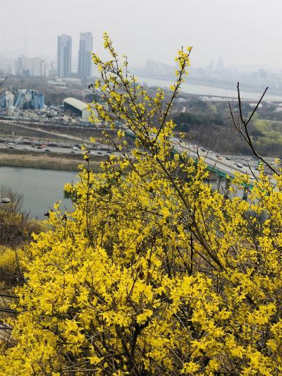 ケナリが花咲くイエロー鷹峰山  平成最後は18回目のソウルで〆る。(あとは食レポです)