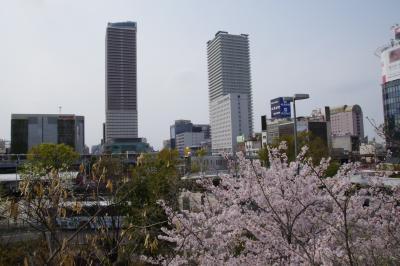 2019年4月7日会議で帰国&伊豆長岡旅行