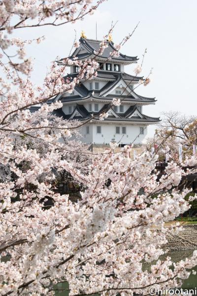 2019年 東海の桜めぐり 【5】墨俣一夜城公園・犀川堤の桜