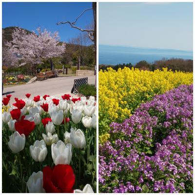 淡路島 春のお花巡り
