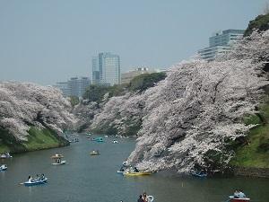 千鳥ヶ淵公園と新宿御苑観桜散策