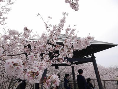 つくば 反町の森公園の桜☆松乃家の鰻重・フルーツピークス☆2019/04/07