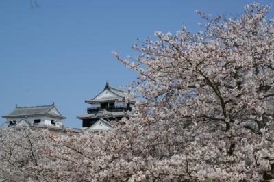 四国「さくら名所100選の地」を訪ねる・その1<松山城(城山公園)>