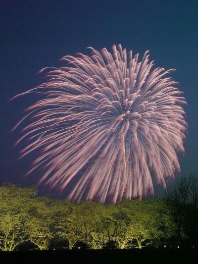 さくらと花火の競演。@嵐山さくらまつり